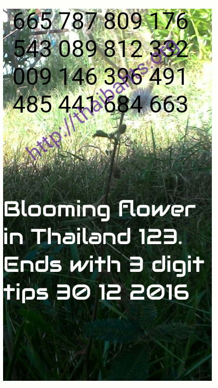 Thai lottery results 30-12-2016 blooming flower 3up tips